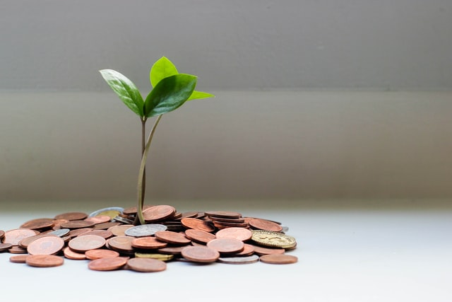 Plant growing from coins.